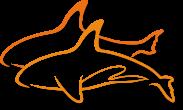 orcas Ihr Datenschutzbeauftragter Stralsund Mecklenburg Vorpommern Greifswald Rostock